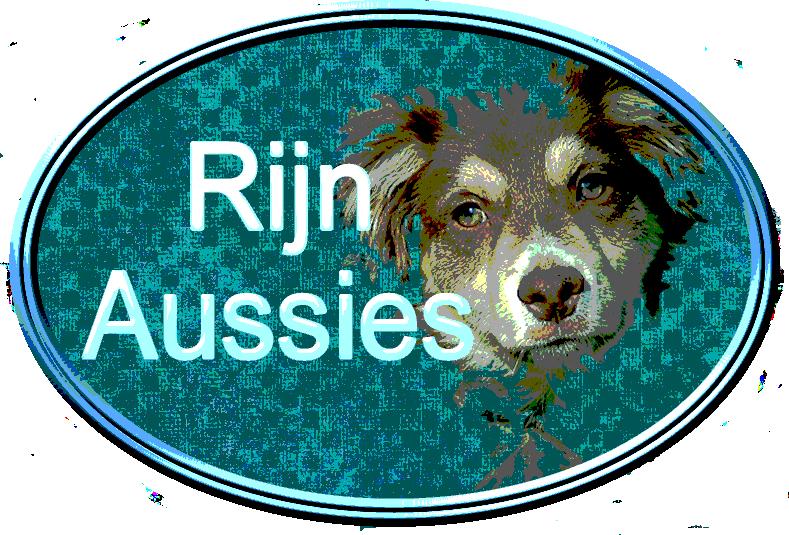 Rijn Aussie